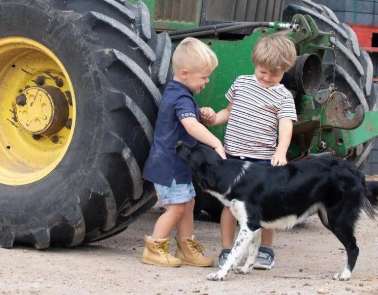 Chn and farm dog